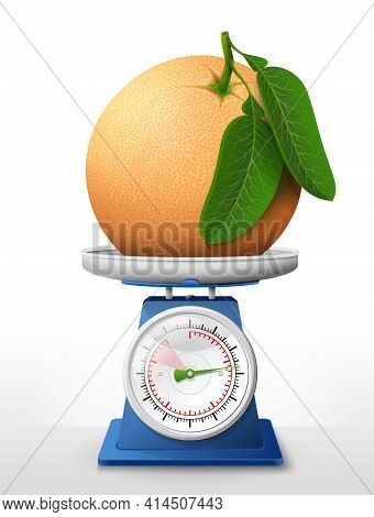 Grapefruit Fruit On Scale Pan. Weighing Raw Grapefruit With Leaves On Kitchen Scales. Vector Illustr