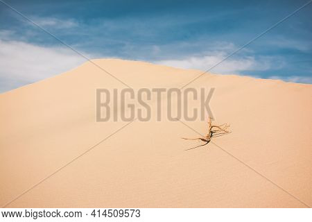 Sand Dunes In Mesquite Flat, Death Valley National Park, California. Blue Sky And Yellow Sand. Singl