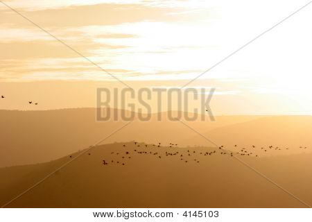 Migrating birds on sunset and mountains background. poster