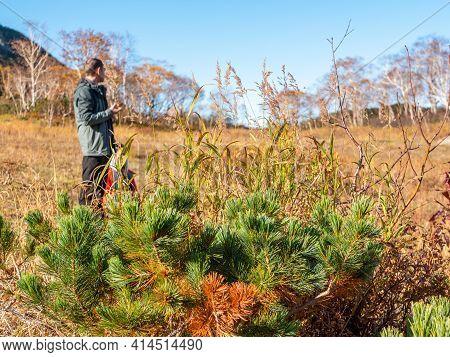 Coniferous Bushes Against The Background Of The Vachkazhets Ridge. Tourist Admires The Autumn Nature