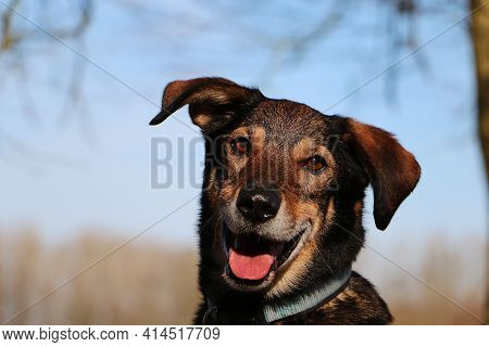 Beautiful Head Portrait From A Mixed Dog
