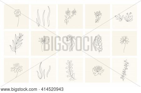 Floral Elements. Collection Of Hand Drawn Plants. Set Design Elements In Sketch Style Flowers And Br