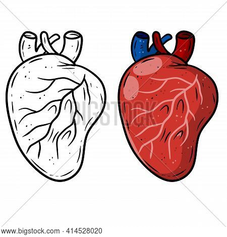 Heart. Human Internal Organ. Medicine And Cardiology. Pumping Blood Through Body. Element For Textbo
