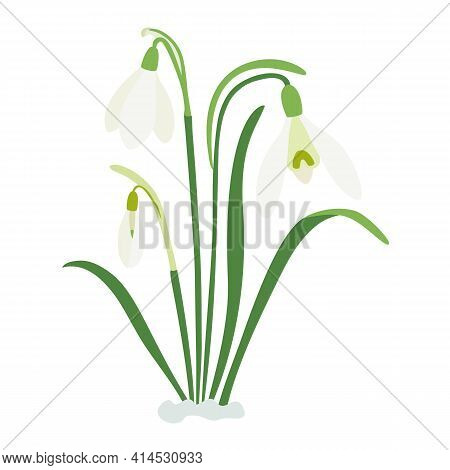 Spring Snowdrops, Three Spring Flowers, A Bouquet For Easter. Forest Plants, March, Flowering. Hand-