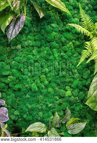 Vertical Garden Background, Green Moss In Office Or Home Interior For Wallpaper. Natural Plants Text