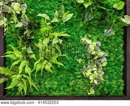 Vertical Garden Detail, Green Plants Wall In Office Or Home Interior. Cozy Ecological Design With La