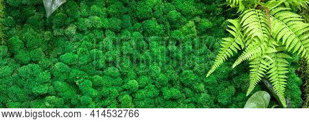 Moss Texture Background, Panoramic Banner With Green Vertical Garden Inside Office Or Home, Mossy Li