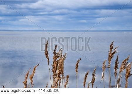 Sunlit Reeds By Seaside With Blue Water