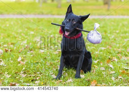Black German Shepherd Dog Traveler Abandoned And Left All Alone On The Road, Street, Sitting In Park