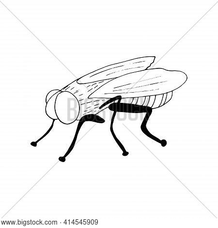 Fly Icon. Hand Drawn Doodle Style. Vector, Minimalism, Monochrome, Sketch Insect Pest Flies