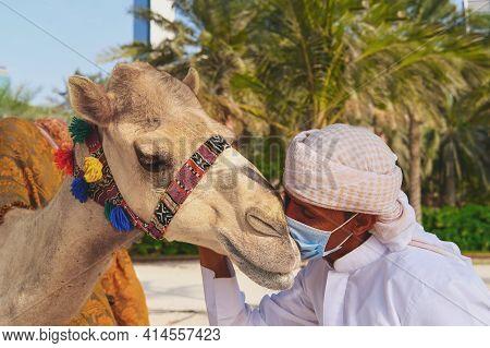 Impressive Scene Of Kind Relationship Between Little Baby Dromedary Camel In Need Of Tender Loving C