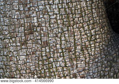 The Bark Of Juniperus Deppeana, Alligator Juniper Or Checkerbark Juniper, Tree, Viewed From Close, R