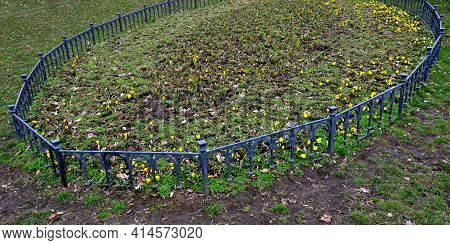 Spring Planting Of Violets, Bordered By A Low Fence Of Metallic Gray Fittings In The Shape Of An Ova