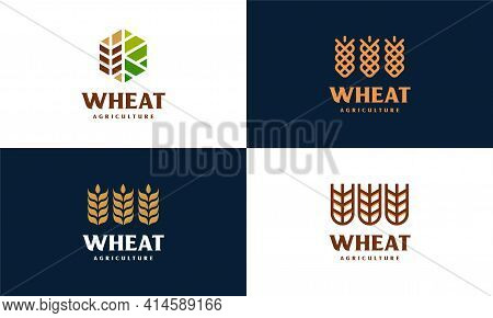 Set Of Luxury Grain Wheat Logo Concept, Agriculture Wheat Logo Template Vector Icon
