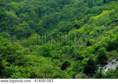 Scenic Alpine Landscape With Green Mountainside With Conifer Forest And Big Crags. Vivid Green Mount