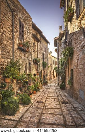 Spello Infiorata Village Street, Plants And Flowers Attached To The Walls. Perugia, Umbria, Italy, E