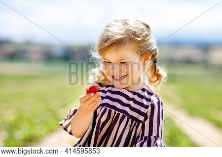 Portrait Of Happy Little Toddler Girl Picking And Eating Healthy Strawberries On Organic Berry Farm