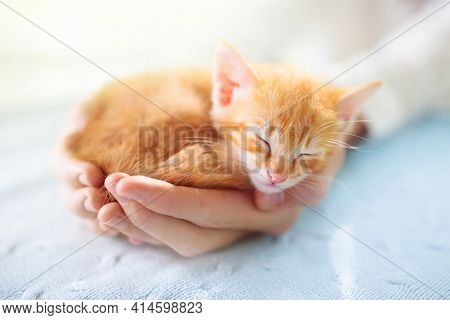 Kitten Sleeping In Man Hands. Cozy Sleep And Nap Time With Pets. Pet Owner And His Pet. Ginger Baby