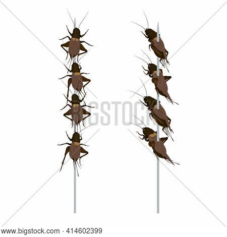 Food Insects: Crickets Insect Deep-fried Crispy For Eating As Ready Meal Food Items On Skewer, It Is