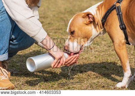 Dog Drinking Water From The Hand Of A Girl, Hydrate Dog Is Important Is Summer