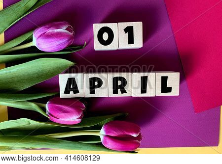 April 1 On Wooden Cubes .nearby Are Tulips On A Wooden Background .spring.calendar For April.