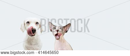 Banner Two Two Hungry Pets, Sphynx Cat And Dog Licking Its Lips. Isolated On White Backgorund.