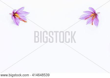Saffron Crocus Flower On White Background. Copyspace. Saffron Flowers On The Upper Corners Of The Pi