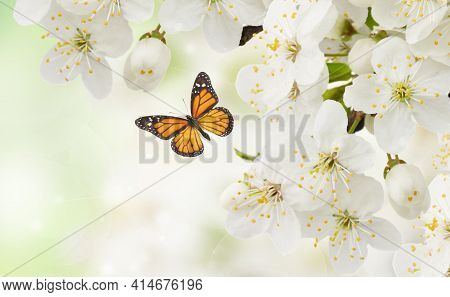 Blossoming Plum Flowers On Green Garden Background With Butterfly
