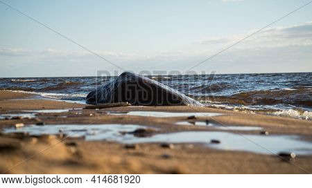 Beautiful Large Brown Boulder On The Sea Shore Beach Washed By Beautiful Sea Water Waves. The Foregr