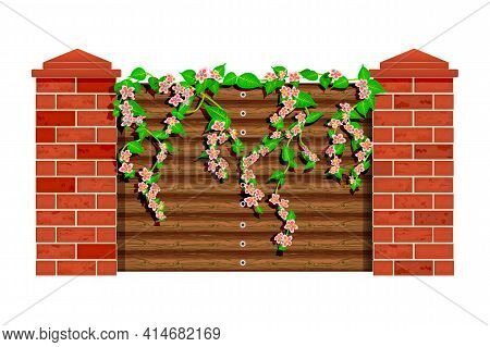 Blooming Tree Branch With Flowers And Green Leaves On Wooden Fence  Isolated On White Background. Pi