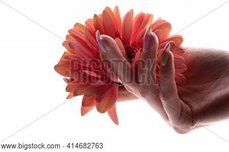 Close-up Of Beautiful Sophisticated Female Hands With Pink Flowers On A White Background. Hand Care