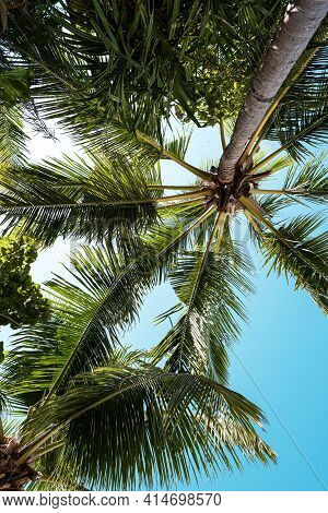 Blue Sky With Clouds, Palm Leaves Frame. Place For Text. Coconut Palms, Green Palm Branches Against