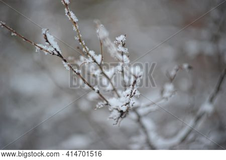 Snow On The Branches Of Trees And Bushes After A Snowfall. Beautiful Winter Background With Snow-cov