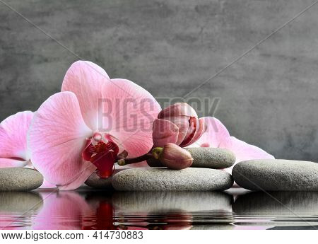 Set Of Pink Orchid And Gray Spa Stones On Water And Reflection.