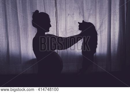 A Pregnant Woman Holds A Cat In Her Arms. Problems With Pets During Pregnancy, The Silhouette Of The