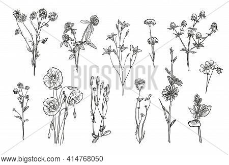 Hand Drawn Wild Flowers Isolated Vector Illustration Set. Engraved Daisy, Poppy, Clover And Bluebell