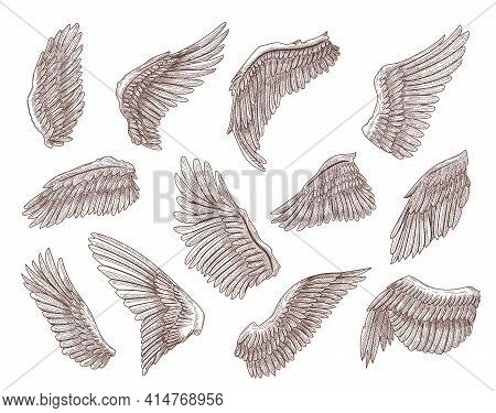 Set Of Bird Or Angel Wings Engraved Sketches Vector Illustration. Collection Of Different Monochrome