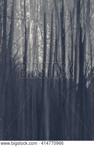 Abstract Black And White Horror Forest Background. Intentional Camera Moving Vertical During The Lon