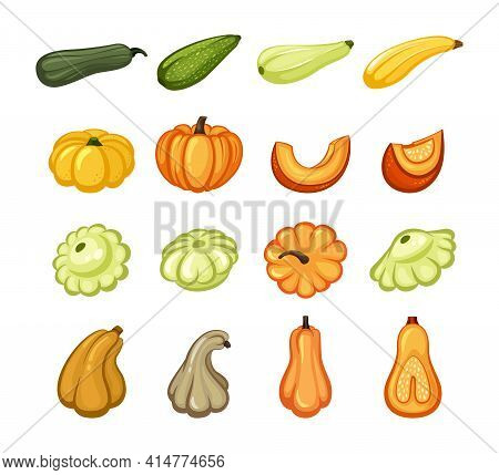 Harvest Ripe Pumpkins And Zucchini Set. Juicy Orange Slices With Sweet Pulp Yellow Vegetable With Gr