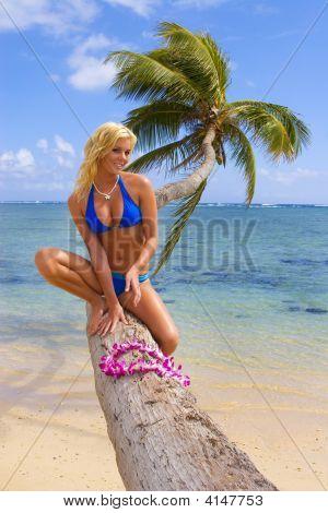 A Beautiful Blond Girl On A Palm Tree