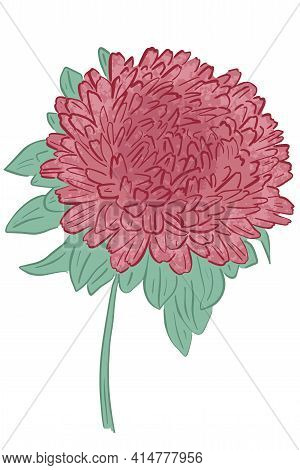 Built-in Single Lush Flower. Large Garden Flower Of Red-pink Color.vector.