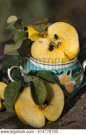 Natural Organic Quince Right From Garden In The Vase With A Branches