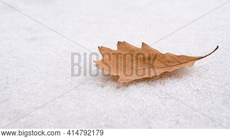 Single Yellow Oak Leaf Lies On The White Snow. Leaf Of A Tree On A White Background. Lonely Scene. M