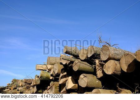 Close Up Of Chopped Wood Outdoors And A Blue Sky On The Background