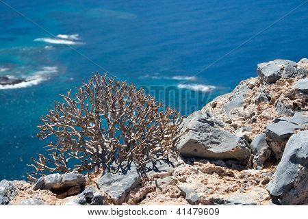 The Plants Of Gramvousa Island, Greece