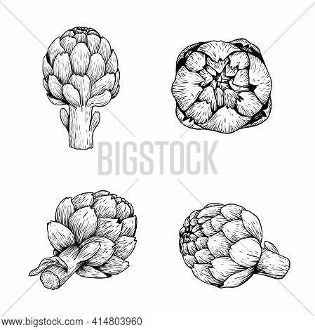 Hand Drawn Sketch Artichokes. Healthy Farm Fresh Vegetables. Ink Drawings. Vector Illustrations Isol