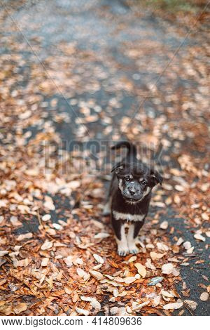 Happy Dog Puppy Stands On The Street In Autumn Park