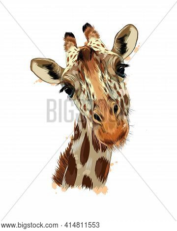 Giraffe Head Portrait From A Splash Of Watercolor, Colored Drawing, Realistic. Vector Illustration O