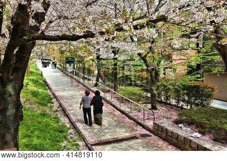 Tokyo, Japan - April 13, 2012: Visitors Enjoy Cherry Blossom (sakura) In Sumida Park, Tokyo. Hanami