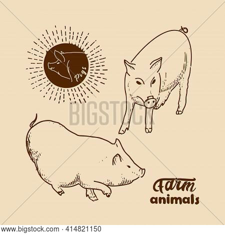 Domestic Pigs. Vector Illustration In Retro Style Of Farm Animals Pigs, Piglets.